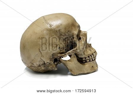 Old Human skull on isolated white background