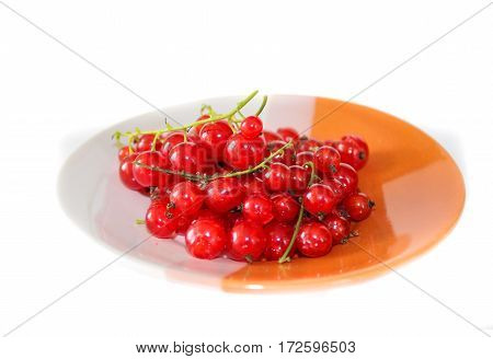 Berries red currants on a plate. Isolated on white background. Closeup.