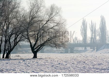 Misty morning on the outskirts of the city with bridge and trees