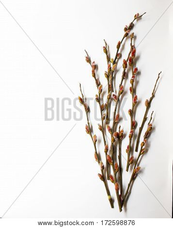 Pussy-willow Bud As A Symbol Of The Beginning Of Spring