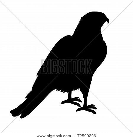 Hawk vector. Predatory birds wildlife concept in black color. World fauna illustration for prints, posters, childrens books illustrating. Beautiful hawk seating isolated on white.
