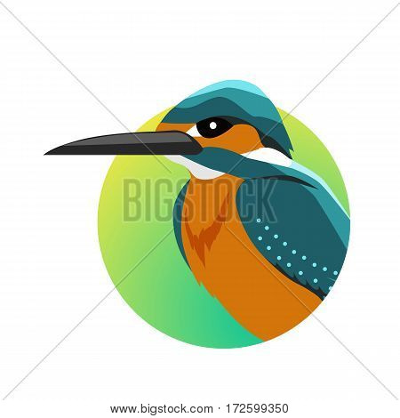 Kingfisher vector. Predatory birds wildlife concept in flat style design. Tropical fauna illustration for prints, posters, childrens books illustrating. Beautiful kingfisher bird seating isolated on white.
