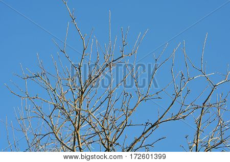 The branches of a tree against the blue sky