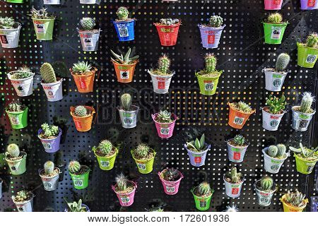 BARCELONA/ SPAIN - MARCH 26. Many different cacti in little pots on March 26, 2015. Barcelona, Spain.