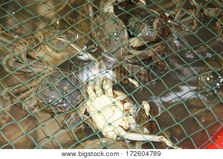 crab in fishing net crabs in the grid