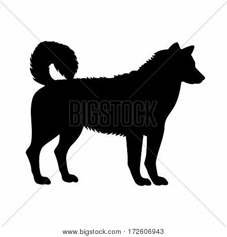 Sled dog ( shade picture ) on white background