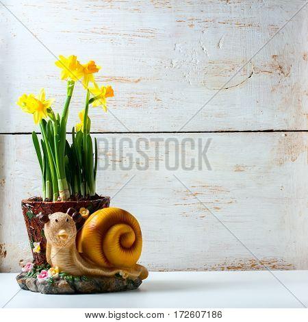 Bunch Of Fresh Daffodils.