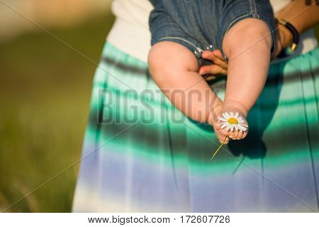 Bare feet of a cute baby on the summer background. Childhood in the farm. Small bare feet of a little baby girl or boy with chamomile. Mother holding baby. parent with child.