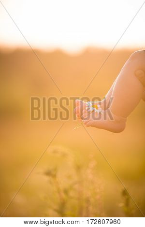 Bare feet of a cute baby on the summer background. Childhood in the farm. Small bare feet of a little baby girl or boy with chamomile.