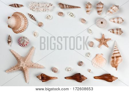 Collection of cockleshells on white background. Flat lay concept