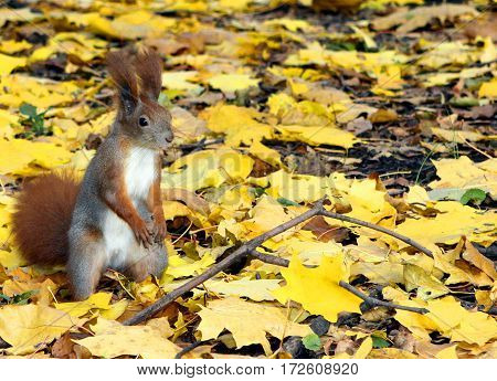 Squirrel Eating Sunflower Seeds In The Forest. Squirrel Eating Nuts In The Woods.