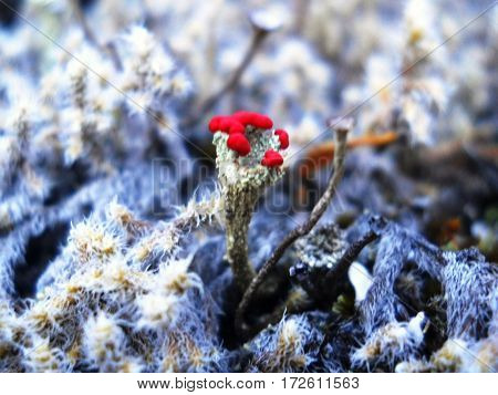 Beautiful red flower blooming in the middle of white nature.