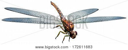 Meganeura , a large prehistoric dragonfly from the carboniferous era