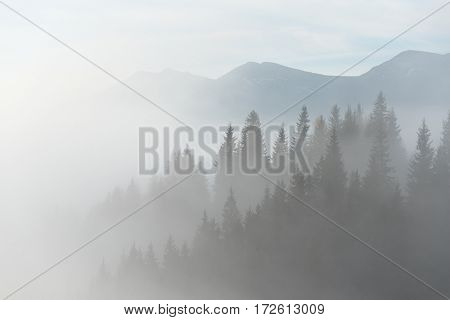 Autumn landscape with fog in the mountains. Fir forest on the hills. Cloudy day. Carpathians, Ukraine, Europe