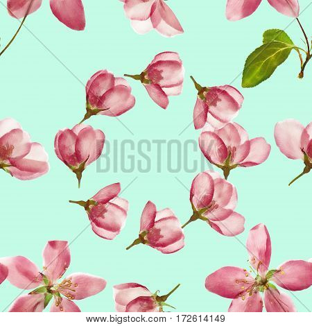 Apple. Texture of flowers. Seamless pattern for continuous replicate. Floral background photo collage for production of textile cotton fabric. For use in wallpaper covers.