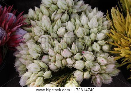 Bunches of delicate multicoloured flowers for sale in a farmers market, including pink and purple proteas, white buds and yellow flowers