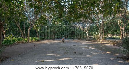 Old dry riverbed of the River Turia, Valencia, Spain. Walk under the shade of leafy and old trees