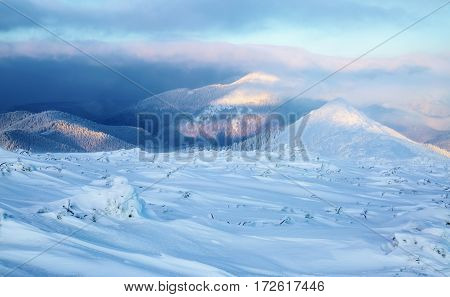 Magic winter sunrise high on the mountains decorates with its lightening the forests with pretty trees cover with snow and lawns