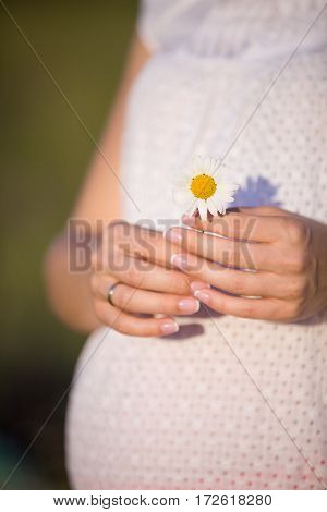 Closeup of tummy of a pregnant woman. Pregnant woman holding daisy and walking on meadow. Torso of young pregnant woman caressing her belly. Future mom expecting baby. Maternity and new life concept
