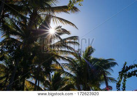 A sun star burst throug some palm trees