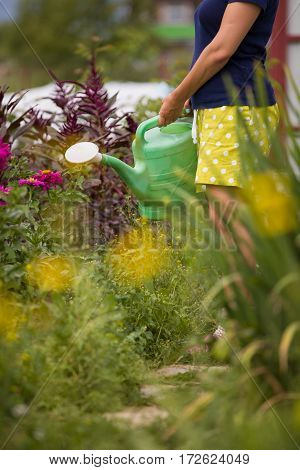 Young woman watering plants and flowers in the garden at summertime. Gardening girl watering flowers with green watering can on a sunny day. Working in the garden.
