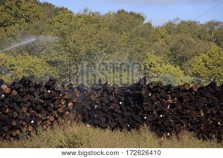 Logs being preserved at lumberyard in Meridian Mississippi