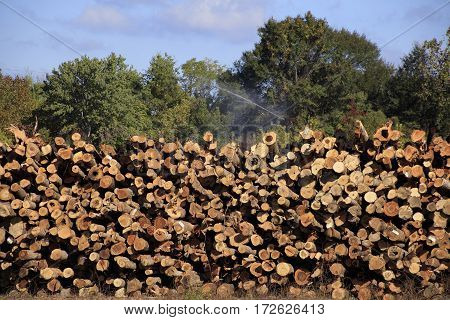 Logs at a lumberyard in Meridian Mississippi under sprinkler system to preserve the logs