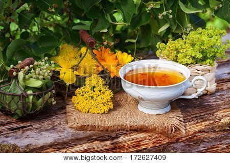Cup of herbal tea and medicinal plants