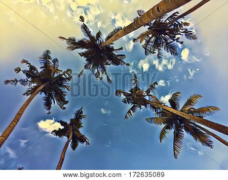 Palm trees on sky background. Coco palm tree leaf crowns digital illustration. Top of palms - view from below. Cloudy sky image with coco palm tree crones. Nature of tropical island. Exotic vacation