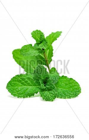 Mint leaves, Mint leaves isolate on white background.