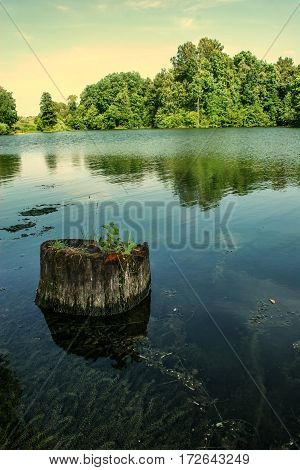 Stump Sticking Out Of The Water With Algae