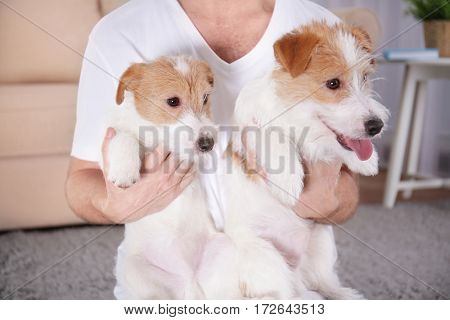Owner with cute funny dogs at home, closeup