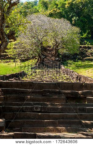 Wat Phu in Southern Laos - The path up the mountain, with stairs in the shade of beautiful trees