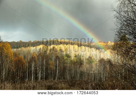 Rainbow On The Dark Sky Background And Illuminated The Forest