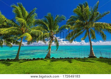 Vibrant tropical beach with grass and palm trees