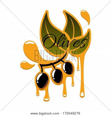 Olive oil of fresh black olives. Vector icon of olive-tree branch with green leaves and ripe olive fruits with drips or drops. Isolated emblem or symbol for olive oil product bottle label