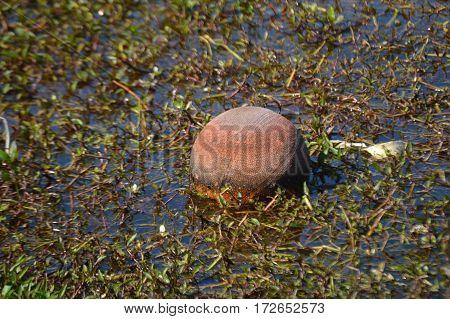 floating basketball in murky water center shot