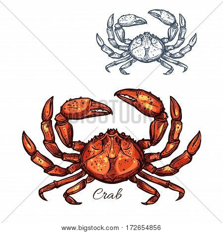 Crab sketch vector icon. Lobster seafood and marine ocean or crustacean crayfish species. Isolated symbol for restaurant sign or emblem, fishing club or fishery industry, sea food and fish market