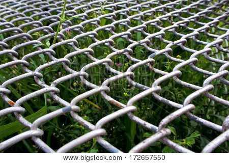 Overgrown grass and plant underneath the steel grating