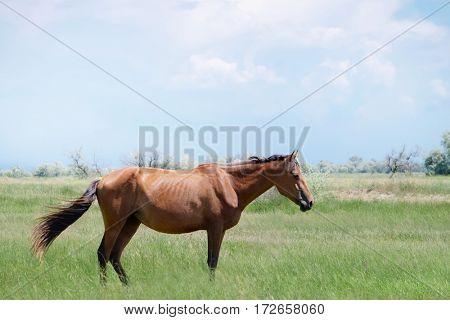 Beautiful horse standing in field