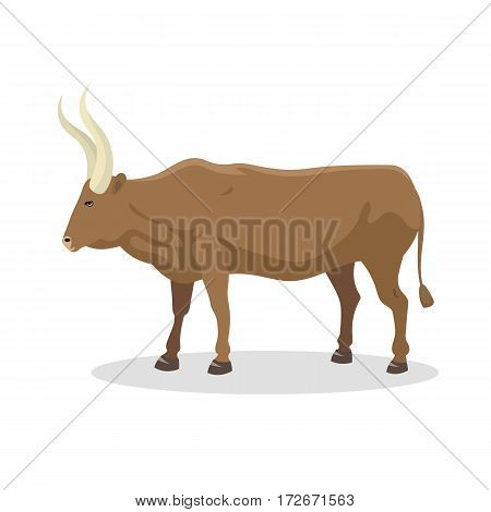 Bull farm animal male standing vector illustration. Cattle mammal nature beef agriculture. Domestic rural bovine horned cartoon buffalo.