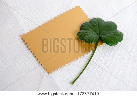 Gold Plate And Green Geranium Leaf On A Light Background
