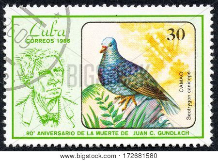 UKRAINE - CIRCA 2017: A stamp printed in Cuba shows a Bird Geotrygoncaniceps Camao the series The 90th Anniversary of the Death of Juan C. Gundlach circa 1986