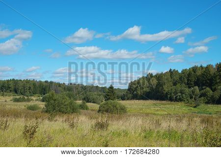 Landscape with the forest and field in the natural park. Nature background