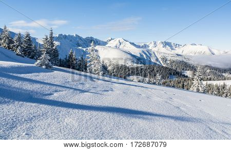 Forest And Mountains In Winter.