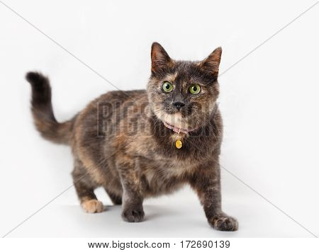 Tortoiseshell cat on a background of light curtains