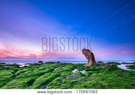 CO THACH, VIETNAM - FERB 15, 2017 - Moss on ancient rock at Co Thach beach, Tuy Phong, Binh Thuan province