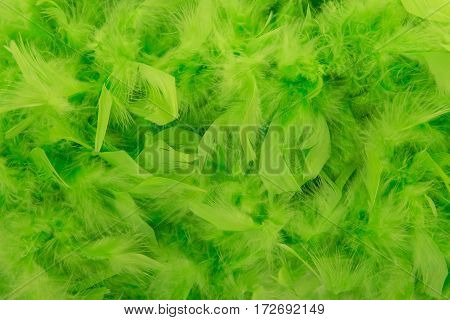 Green feathers from a boa in a full frame image