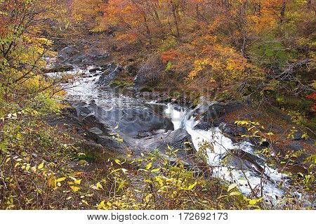 A river running through a forest in Japan in autumn