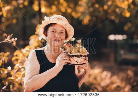 Laughing senior woman 70-75 year old holding basket with green apples in garden. Looking at camera. 80s.